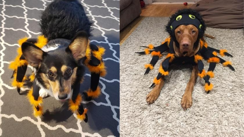 best halloween costumes for dogs 2021 SPIDER
