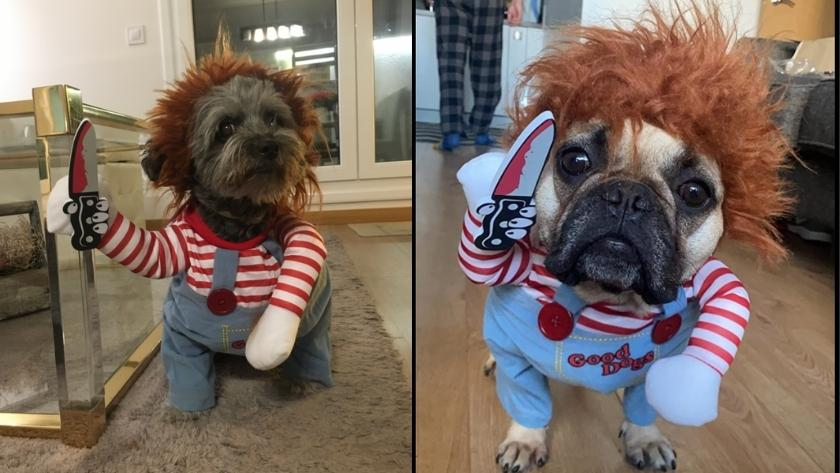 best halloween costumes for dogs 2021 deadly doll