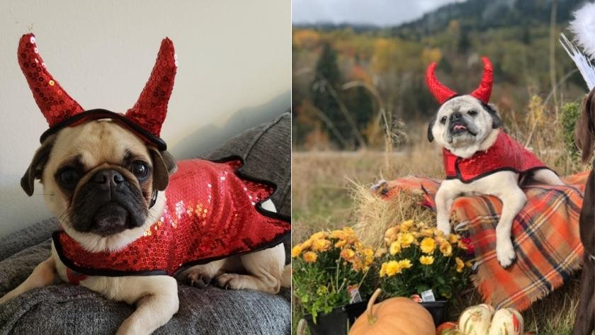 best halloween costumes for dogs 2021 devil