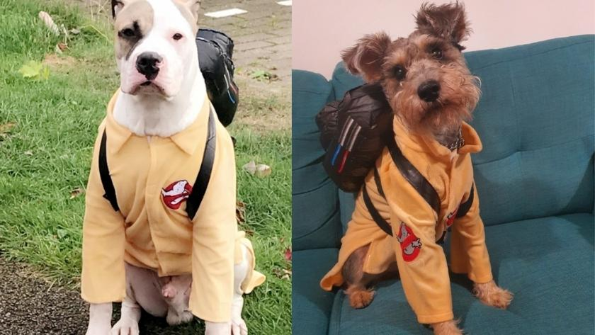 best halloween costumes for dogs 2021 ghostbusters