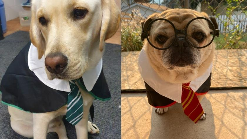 best halloween costumes for dogs 2021 hogwarts house wizard
