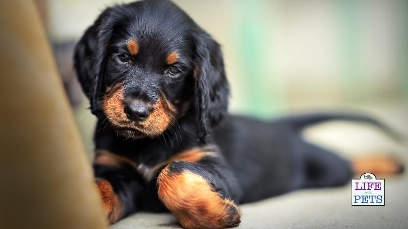 top tips to giving your dog a new home