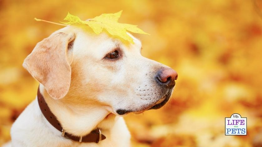 10 of the most common dangers for dogs in autumn