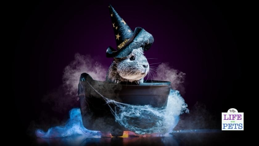 6 Tips for Dressing up Small Pets & Reptiles in Halloween Costumes