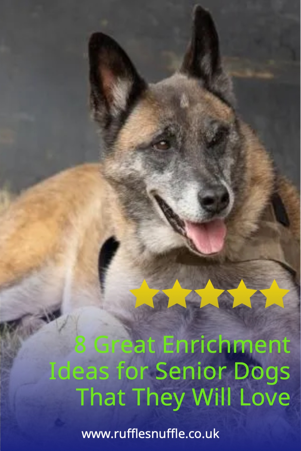 8 Great Enrichment Ideas for Senior Dogs That They Will Love