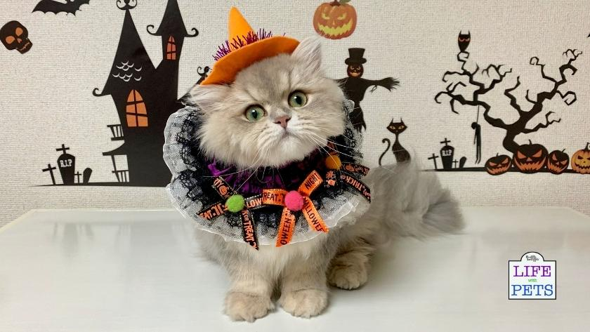 Six tips to keep your cats safe this Halloween