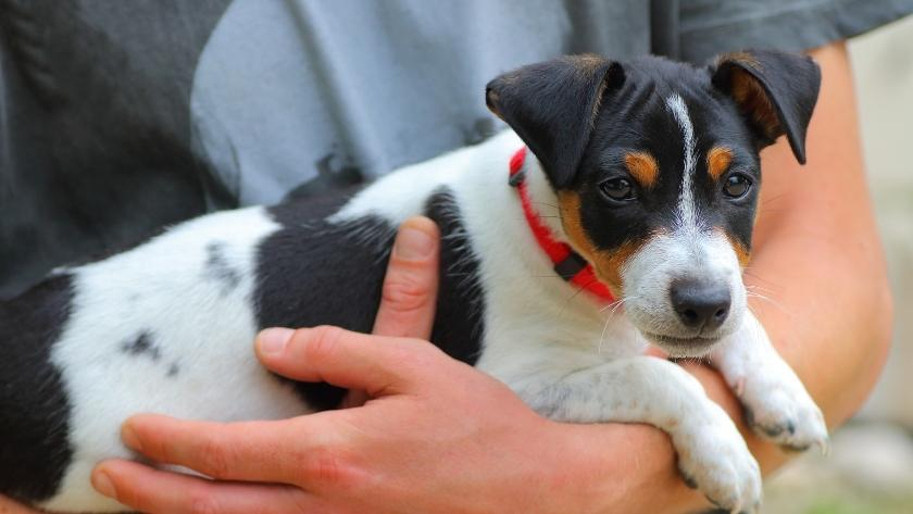 cost of owning a small dog uk