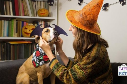 pros and cons of dressing up your dog (2)